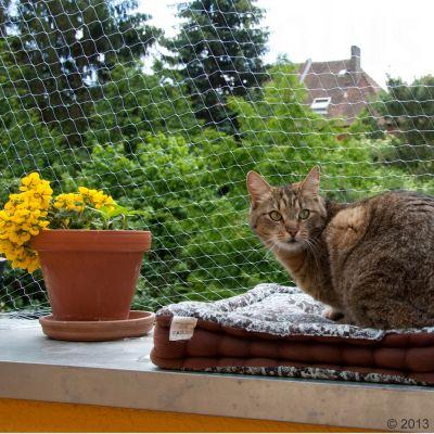 Cat safety net transparent great deals at zooplus - Empecher les chats de venir dans le jardin ...