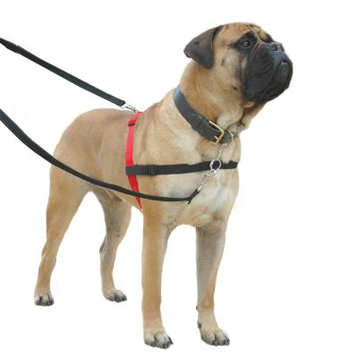 Hunter Dog Harness Reviews