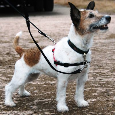 Best Dog Training Lead Uk