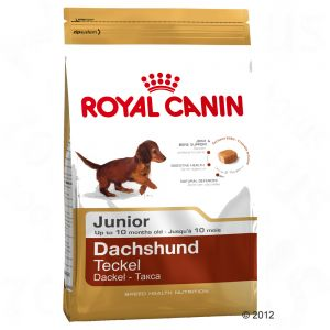 royal canin breed hundefutter zu discountpreisen bei royal canin dachshund junior. Black Bedroom Furniture Sets. Home Design Ideas