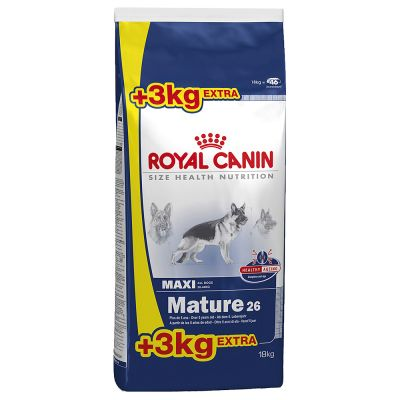 mature royal canin maxi