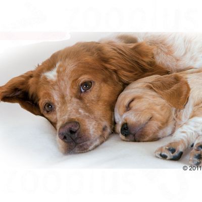 Royal Canin Medium Starter Mother Amp Babydog